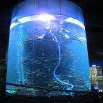 aiškus akrilo cilindras, didelis žuvų bakas akvariumuose ar vandenynų parke