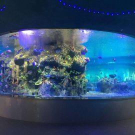 gamykloje tiekiamos žuvies dubenys, apvalaus stiklo bako akvariumuose