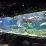 Individualizuotos prabangaus dizaino povandeniniai Tankūs akriliniai skydai Akvariumo langai Stiklo lakštai