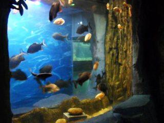 2018 Akvariumo lango aukščiausios kokybės akrilo skydas