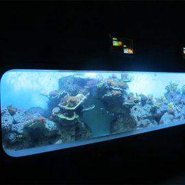 Dirbtinis akrilo cilindrinis akrilo akvariumas / peržiūros langas