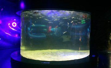 Akrilo žuvų talpykla