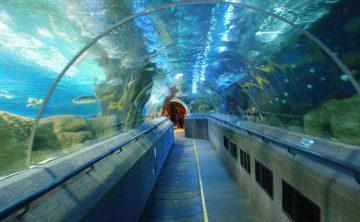 Akrilo tunelis