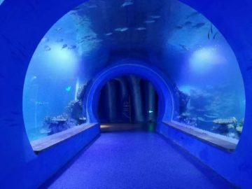Labai aiškus akrilo akrilo akvariumas, kurio formos yra skirtingos