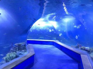 skaidrus akrilo stiklo tunelio akvariumas